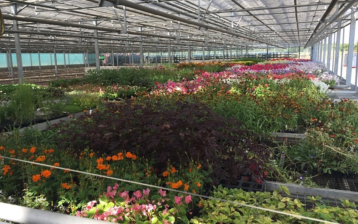 Achetez Des Plantes De La Pépinière Municipale À - Ville De ... à Piscine Pepiniere