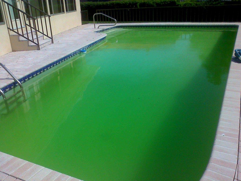 L'eau De Ma Piscine Devient Verte : Que Faire ? - Swimmy encequiconcerne Eau Verte Piscine Bicarbonate De Soude
