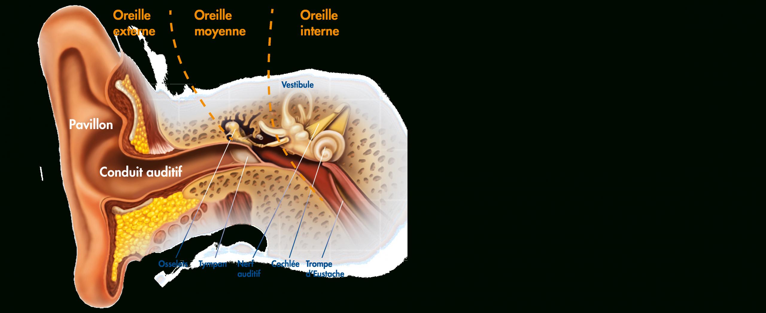 L'intérêt Du Lavage Des Oreilles intérieur Oreille Bouchée Piscine