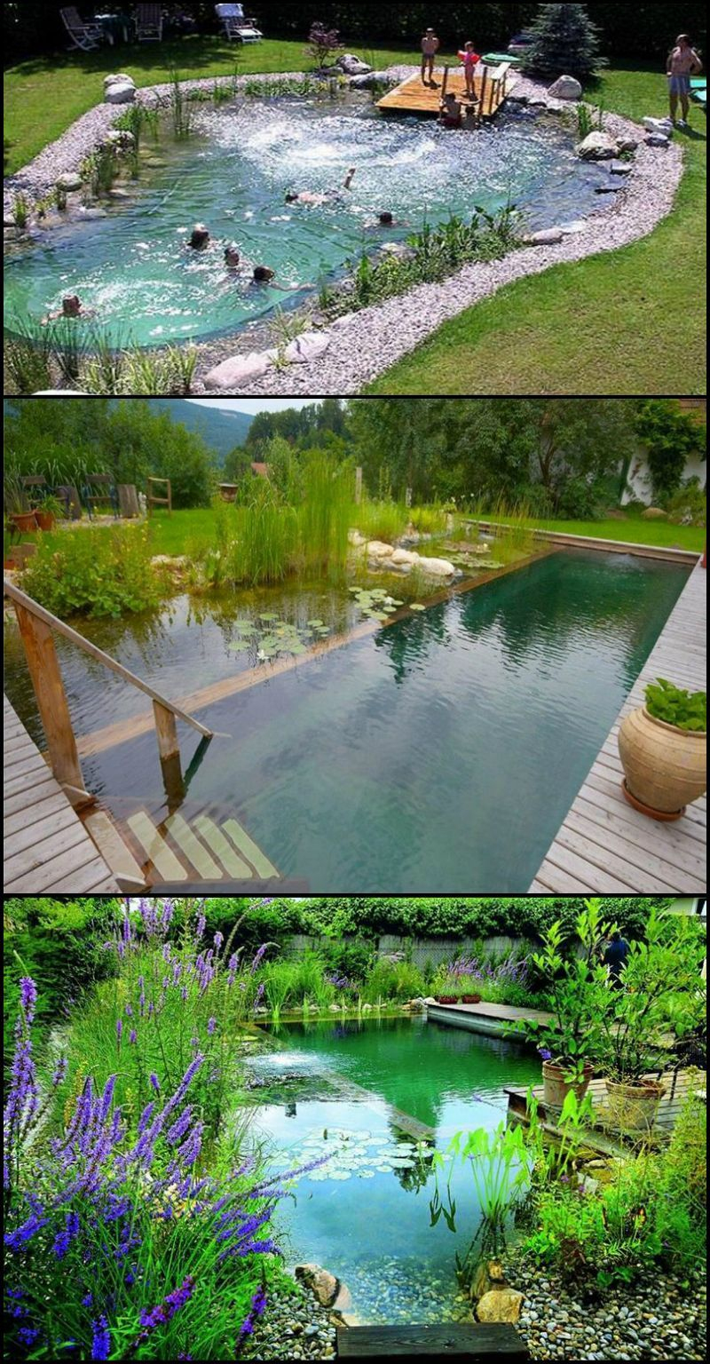 Natural Swimming Ponds, Also Called Natural Pools, Are A ... concernant Matelas Gonflable Piscine Gifi