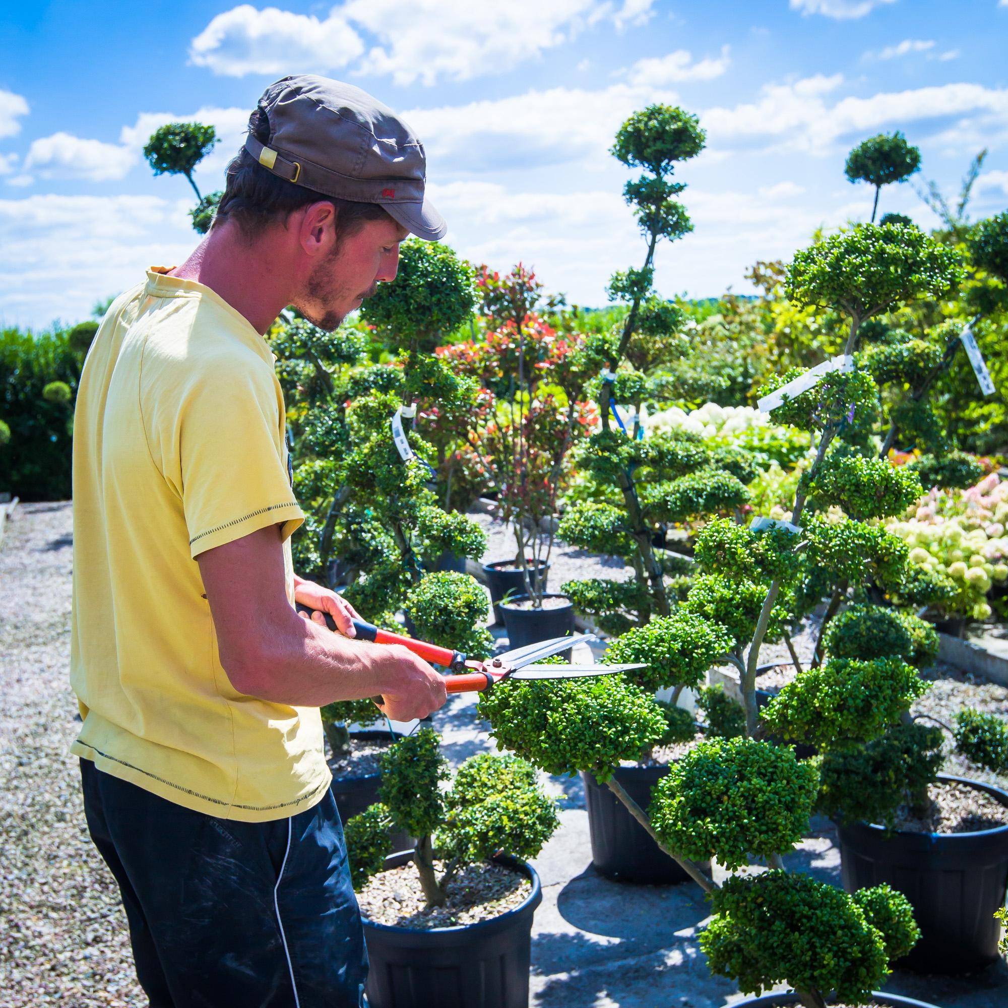 Pépinière   Création Bâti Jardin avec Piscine Pepiniere