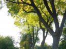 Allée Ouest, Jardin Botanique | 3Echeval | Flickr pour Allee De Jardin