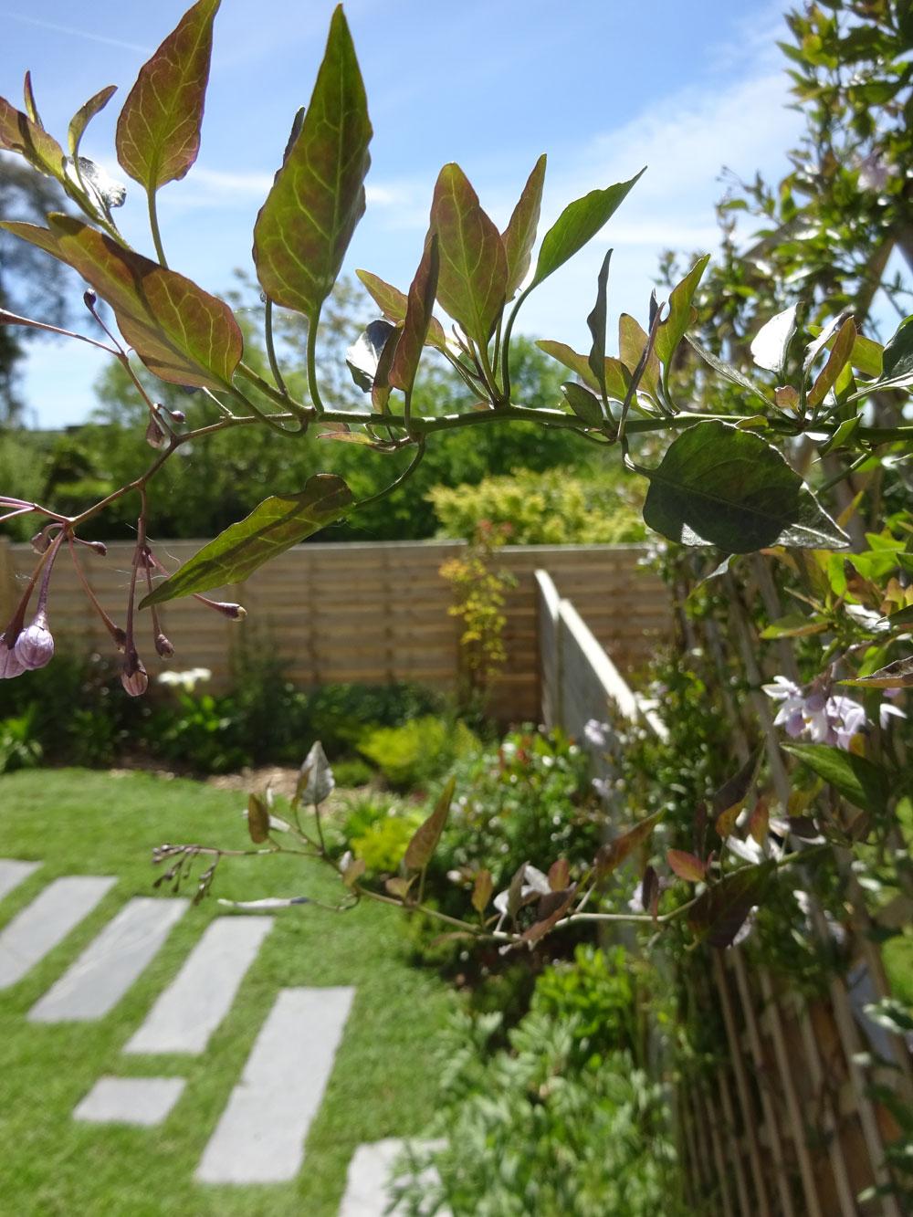 Aménagement D'un Jardin Linéaire Tout En Longueur - L ... pour Amenager Jardin Rectangulaire
