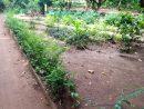 File:allée Du Jardin Des Plantes Et De La Nature.jpg ... destiné Allee De Jardin