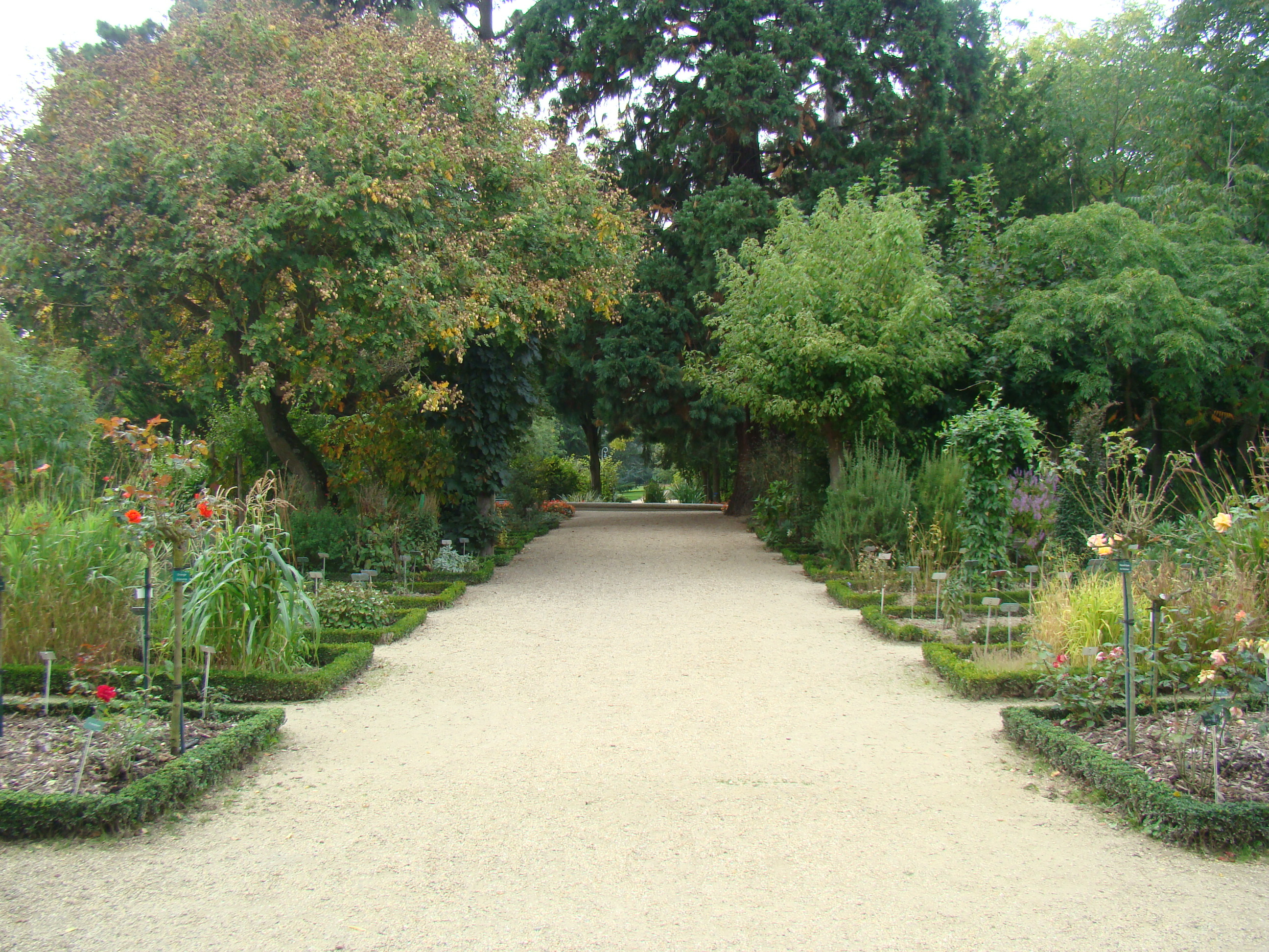 File:allée Jardin Botanique.jpg - Wikimedia Commons pour Allee De Jardin